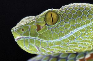Animales venenosos en La Casa de la Ciencia