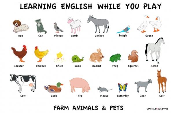 Animales Dela Granja Con Su Nombre En Inglés Imagui