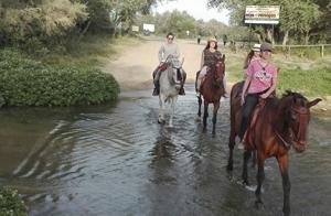 Paseo a caballo de 2 horas por Doñana