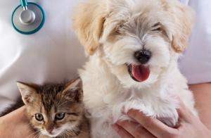 Revisión veterinaria de tu mascota + test